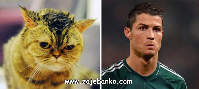 Mačka poput Cristiana Ronalda