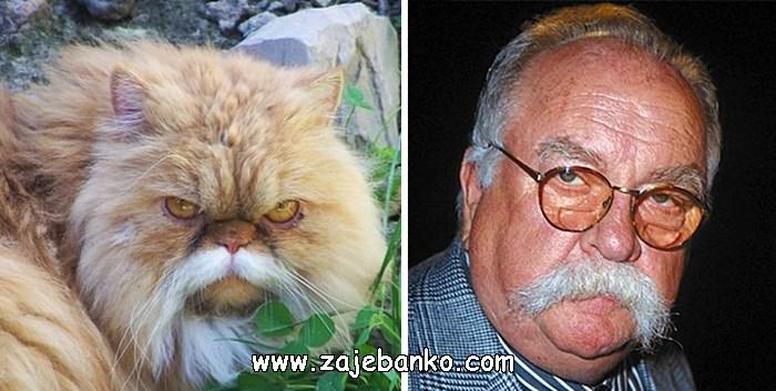 Brkata mačka poput Wilforda Brimleya