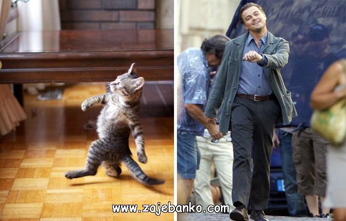 Mačka koja se šepuri poput Leonarda