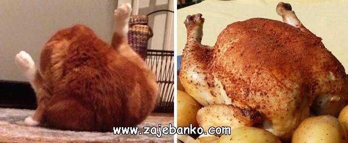 Mačka poput pečene piletine