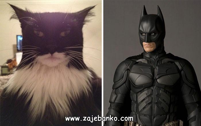 Mačka koja sliči na Batmana