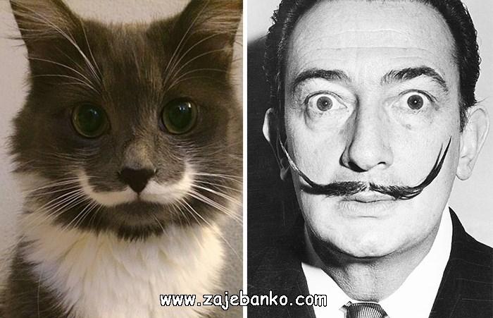 Mačka poput Salvadora Dalia