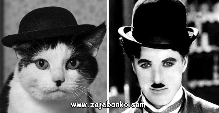 Mačka poput Charlia Chaplina