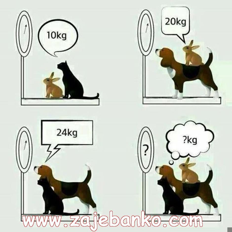 Matematička mozgalica: pas, mačka i zec na vagi