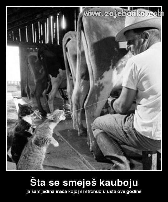 Životinje smiješne slike - mačka pije mlijeko