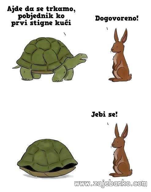 utrka kornjače i zeca