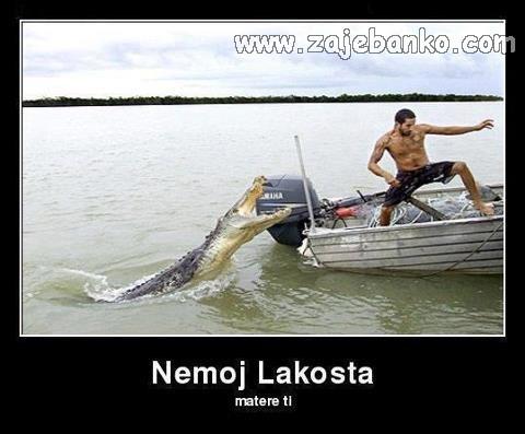 krokodil lacoste