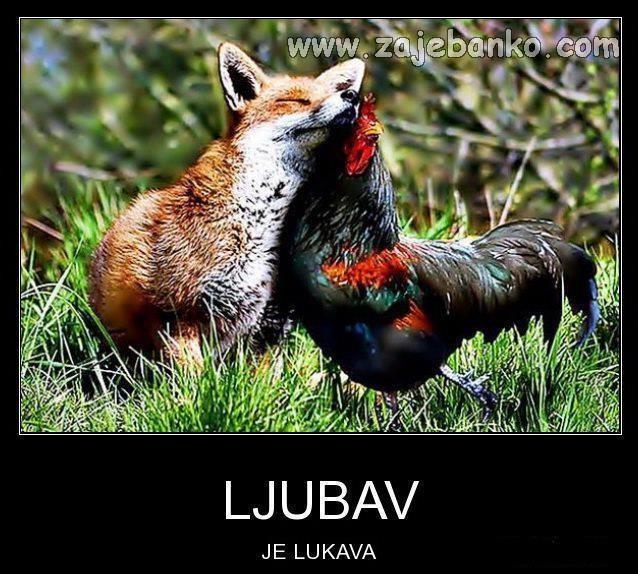 lisica i kokoš - ljubav je lukava