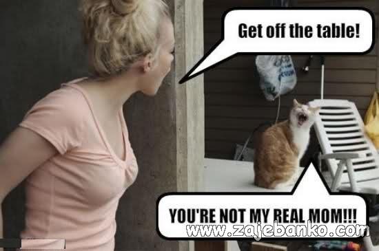 ljuta mačka