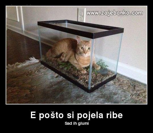 mačka glumi ribicu u akvariju