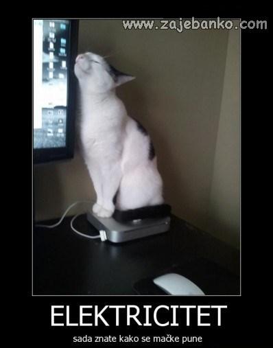 mačka ispre ekrana - elektricitet