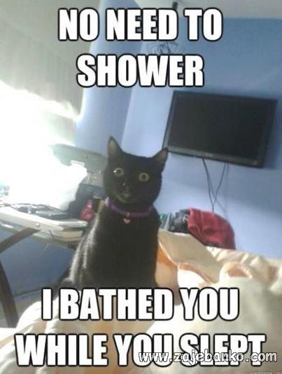 Kad te mačka izliže