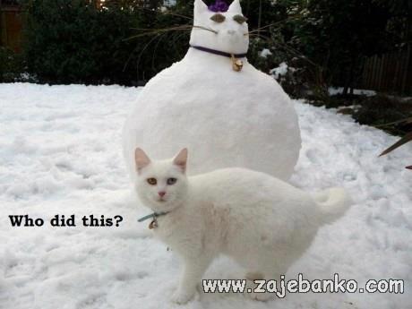Mačka na snijegu