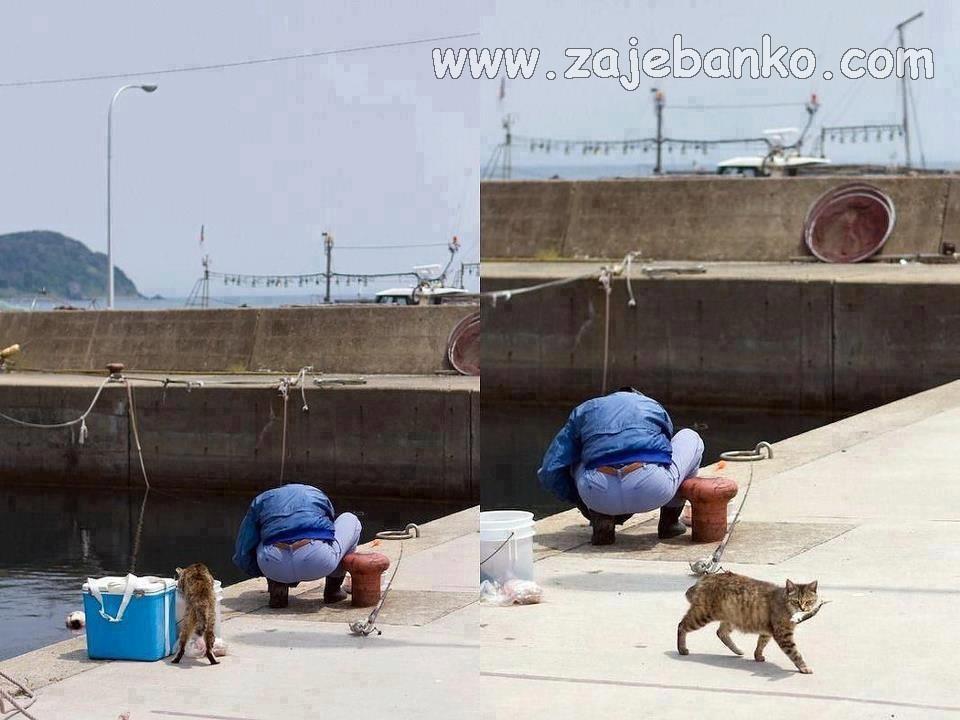 Mačka ukrala ribu