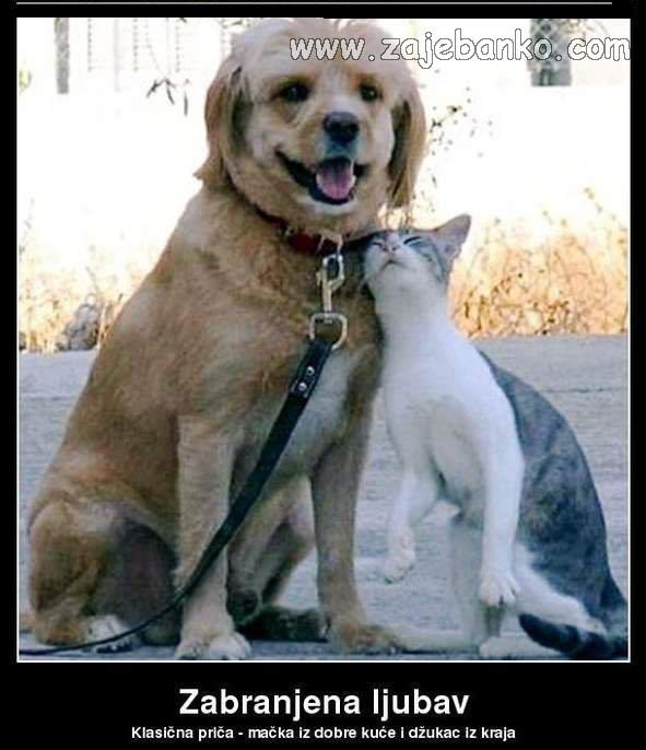 mačke i psi humor