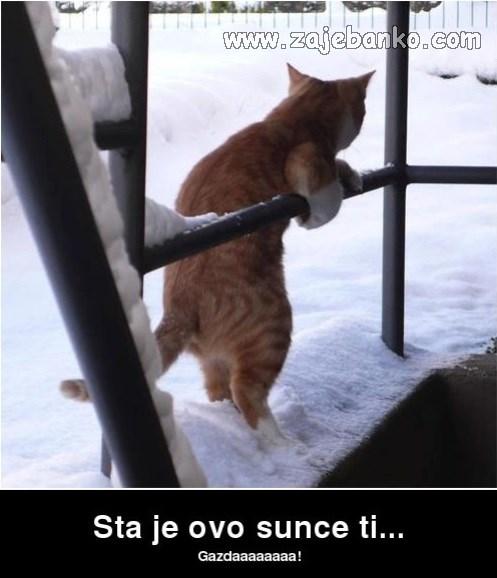 mačke smiješne slike