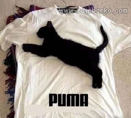 smiješne slike mačaka