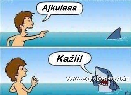 morski pas smiješna slika