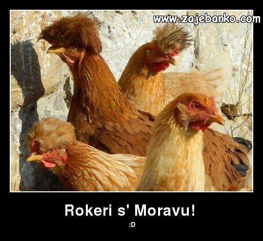 Rokeri s Moravu - smiješna slika