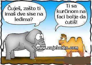 slon i deva