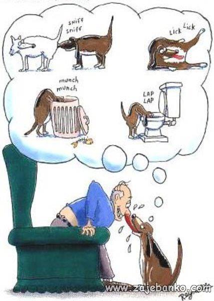 smiješan pas liže vlasnika po licu
