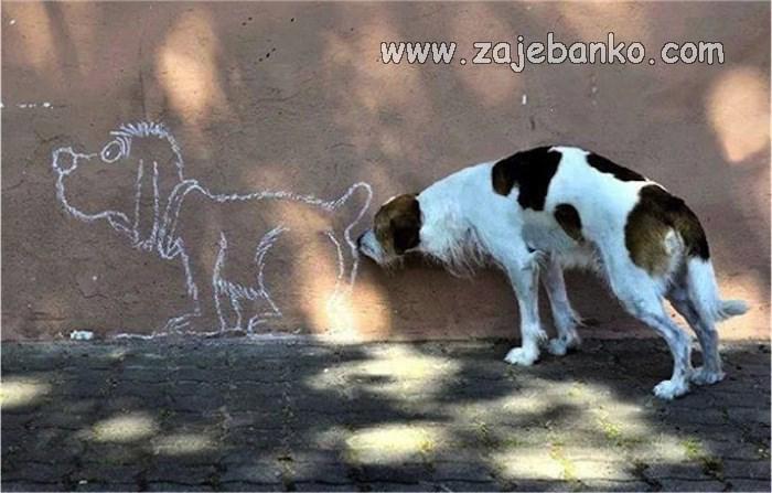 smiješan pas njuši