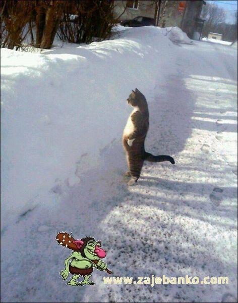 smiješna mačka na snijegu