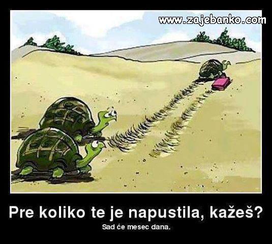 smiješne kornjače