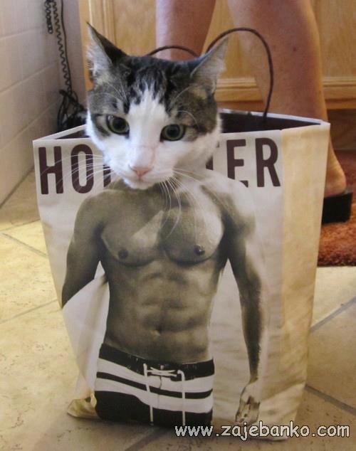 mačka bodybuilder