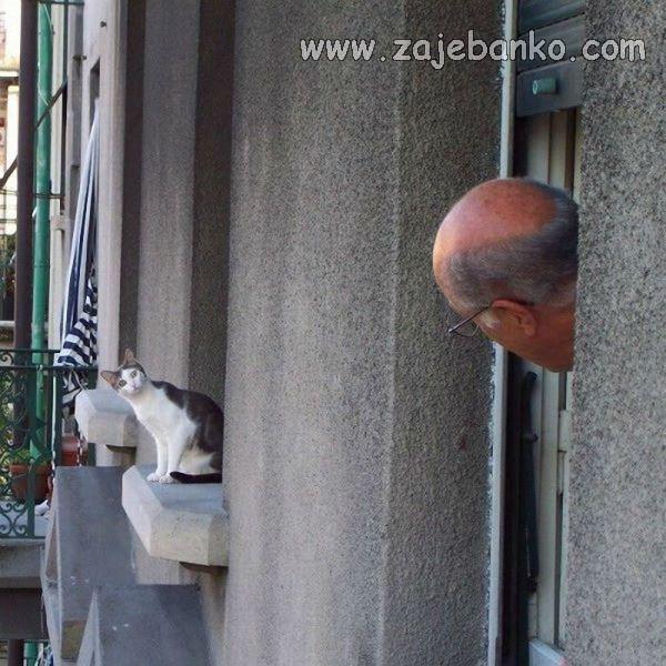 smiješne mačke - pogledi