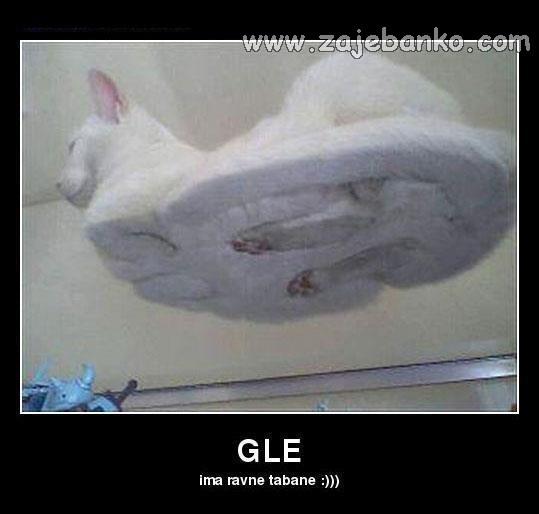 Smiješne slike mačke - mačka ima ravne tabane