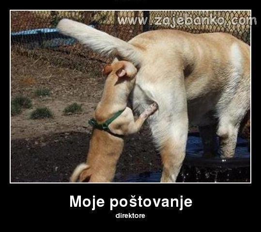 Smiješne slike pasa - mali i veliki pas