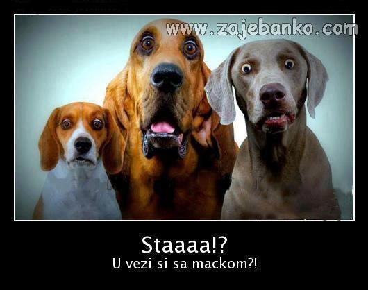 Smiješne slike pasa - pas u vezi s mačkom