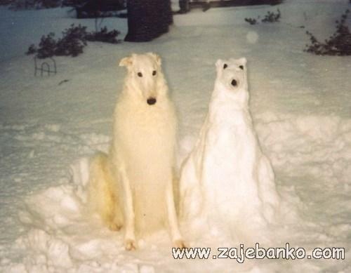 Smiješne slike pasa