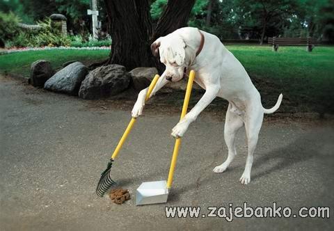 Smiješne slike pasa - pas čisti nered za sobom