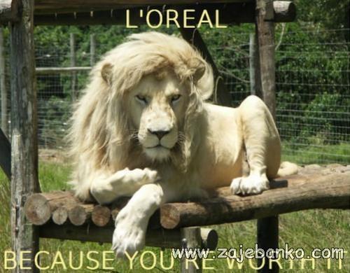 Smiješne slike životinja - lav s frizurom