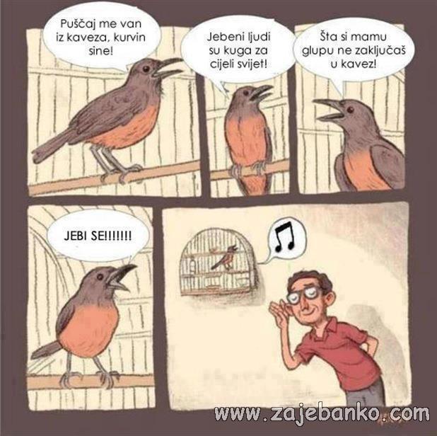 Smiješne slike životinja - ptice pjevice