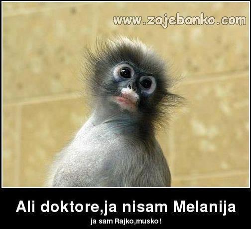 Smiješne slike životinja - mali majmun