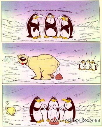 Smiješne slike životinja - polarni medvjed i pingvini