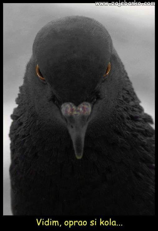 Smiješne životinje - kad se golup posere na auto