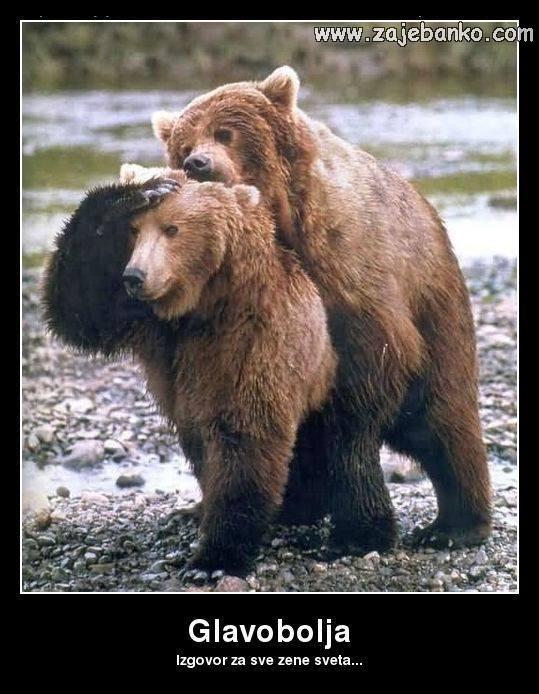 Smiješne životinje - medvjed i medvjedica
