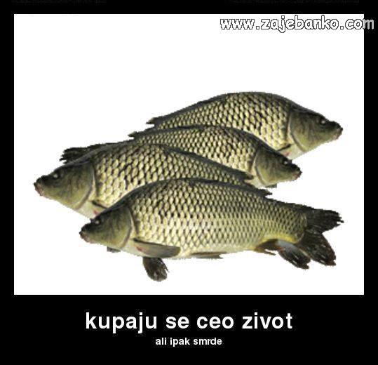 Smiješne životinje - ribe