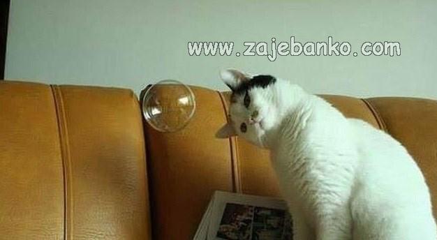 Smiješne životinje - mačka gleda