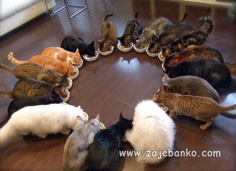 Smiješne životinje - mačke jedu