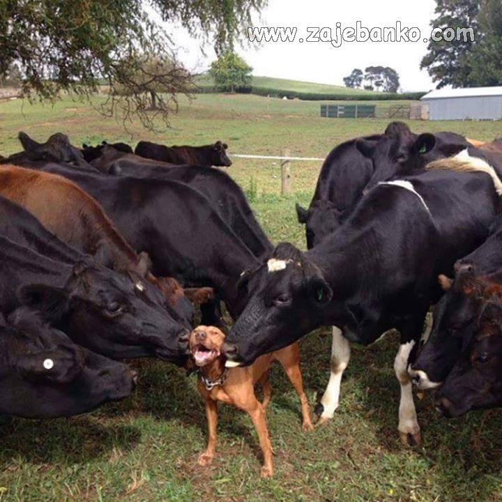Smiješne životinje - sretan pas