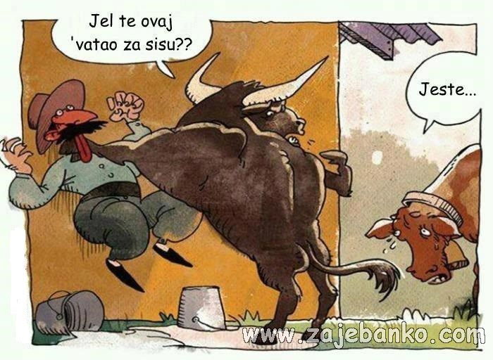 Smiješne životinje - krava i bik