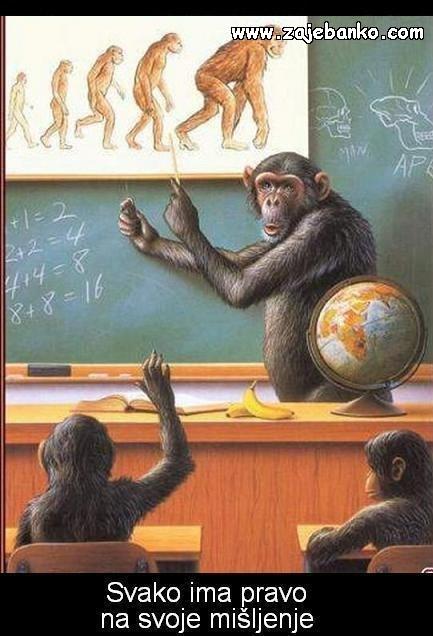 Majmuni - teorija evolucije