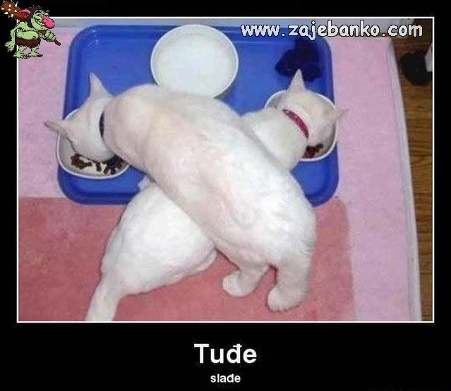 Mačke jedu - tuđe je slađe
