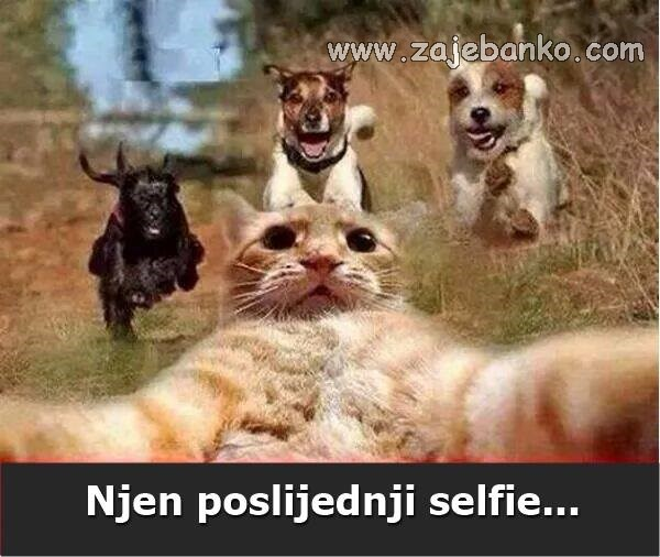 Životinje best off - mačka snimila selfie