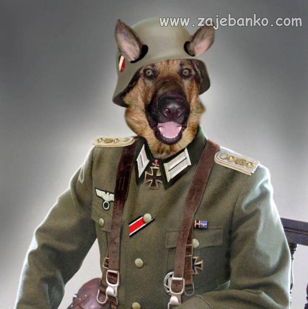 Životinje smijeh - njemački ovčar kao vojnik